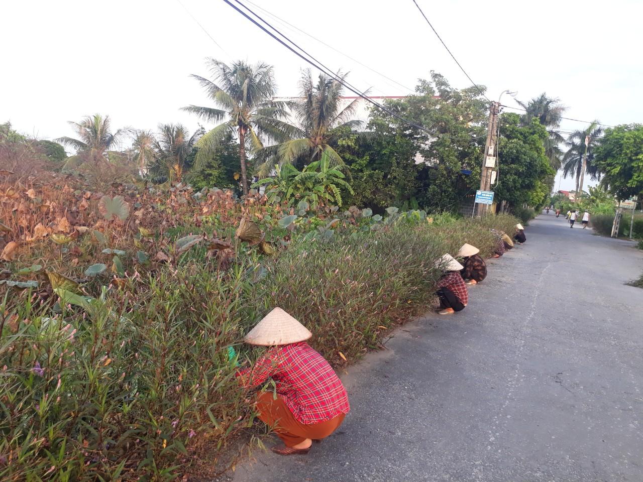 Hội Nông dân phường Văn Đẩu chăm sóc tuyến đường hoa